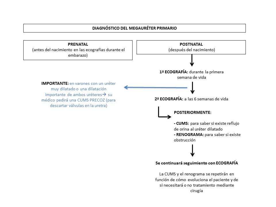 Figura 5. Resumen del diagnóstico del megauréter primario.